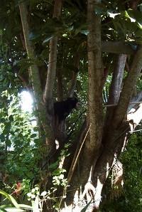 Indie climbing tree